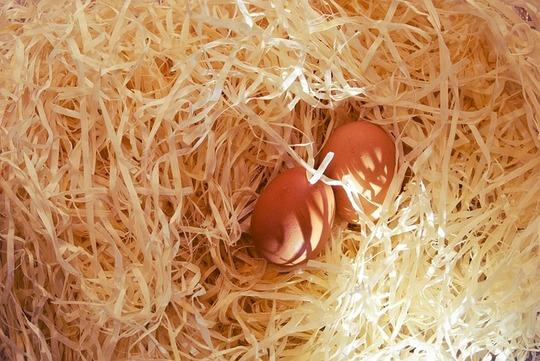 Eggs-924746_640-1487628820