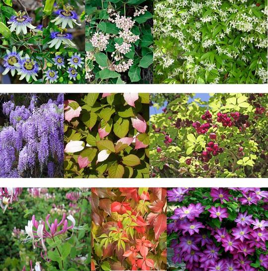 Plantes-1489075909