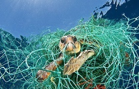 Turtle-caught-in-net-1489583056