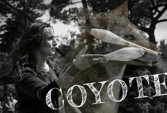Affiche_coyote_test5-1490876366