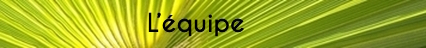 Palmier_banderole_-_copie_14-1492006600