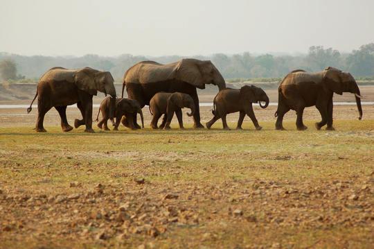 Elephant_pix_sm-1495565158