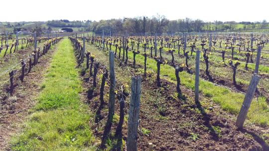 Vigne-fronsac-1496662931