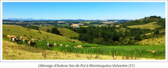 Paysage-vaches2-1496926072