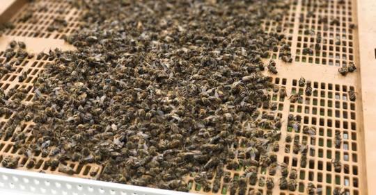 Actualite_apiculture_mauvais_temps_abeilles_mortalite_perte_ruche_catastrophe_mai_2017-1497052860
