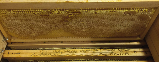 Actualite_apiculture_juin_honey_miel_recolte_harvest_beekeping_bee_abeille_honeybees_apiculture-1497568068