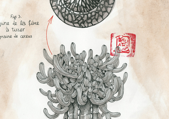 Detail_specimen_n_3-1504293420