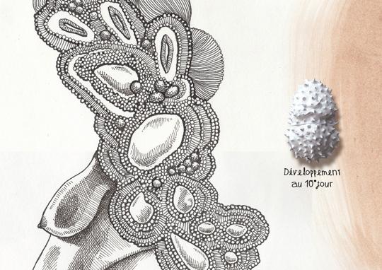Detail_specimen_n_13_by_elia_pagliarino-1504293465