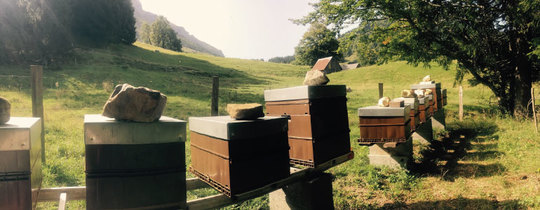 Actualite_apiculture_aout_haute_montagne_bee_abeille_honeybees_beekeeping-1504383771