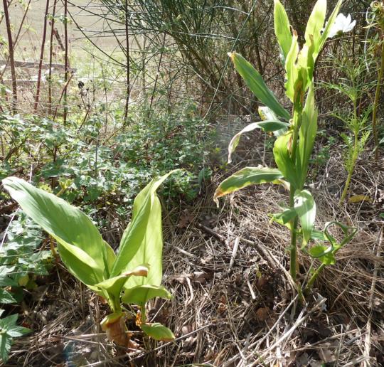 Plantes_ayurv_diques-1507062738