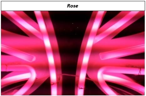 Rose1-1508448139