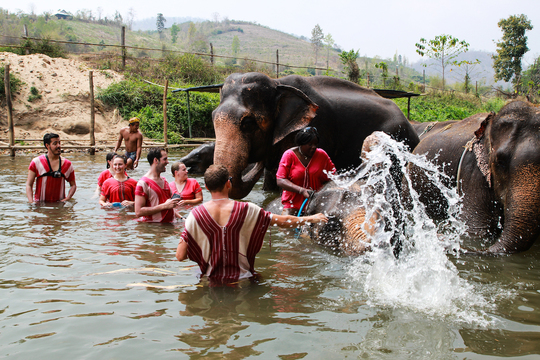 Chiang-mai-elephant-11-1509033892