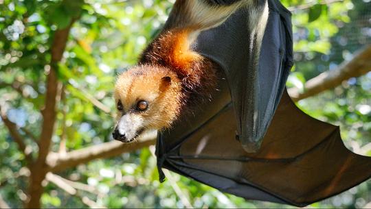 Bat-1509990129