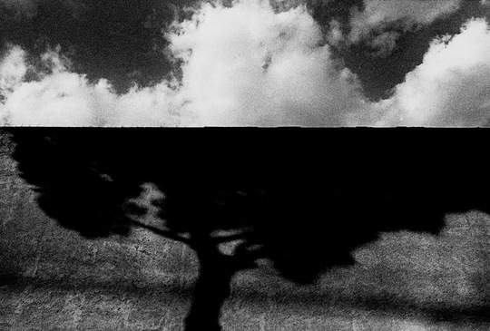Kk-jeh-107__tree_shadow_and_clouds__rome_1999-1512745263