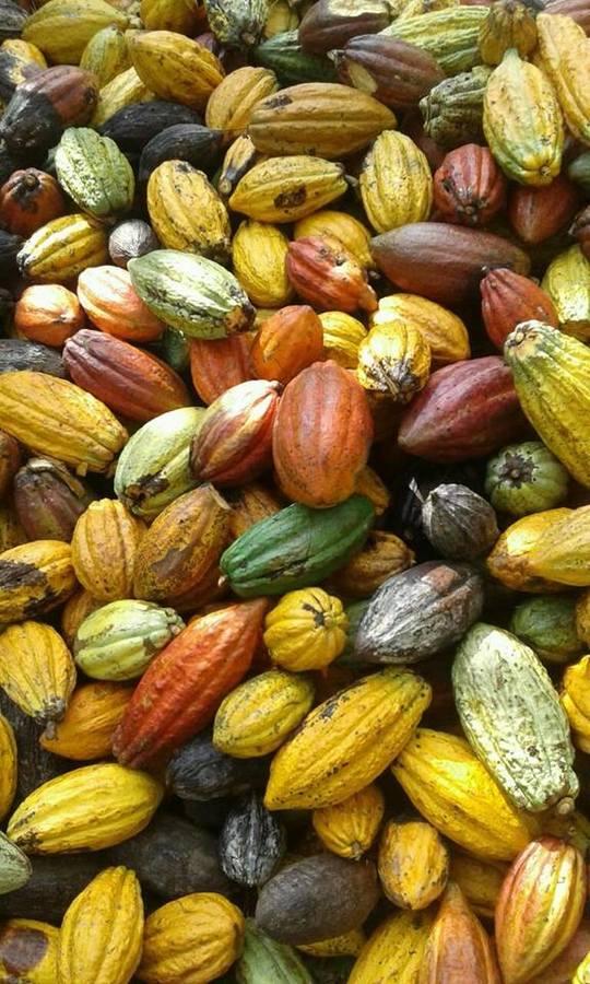 Cacao-1513331954