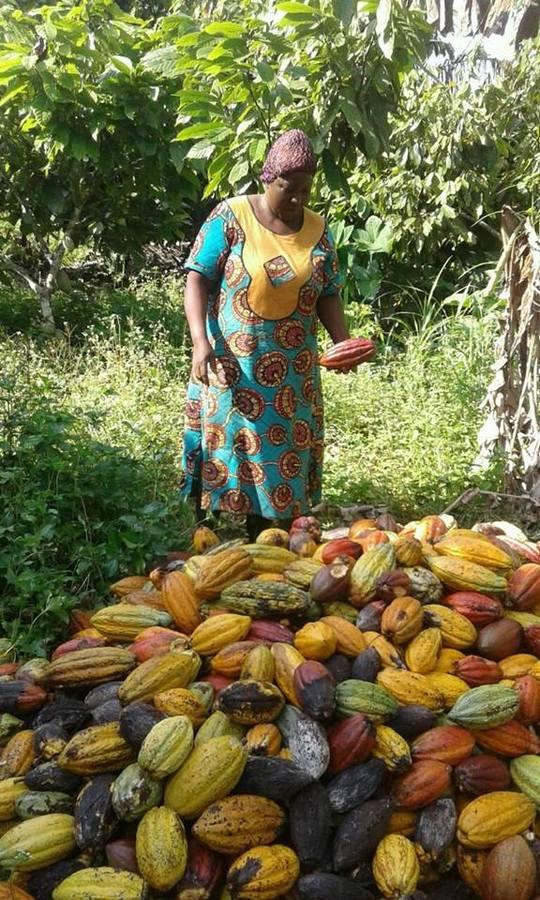Cacao1-1513331992