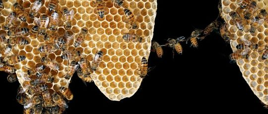 The-wax-chain-with-honeybees44_ret-e1507558149557-700x300-1518387760