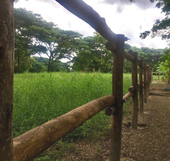 barrière bois éléphants