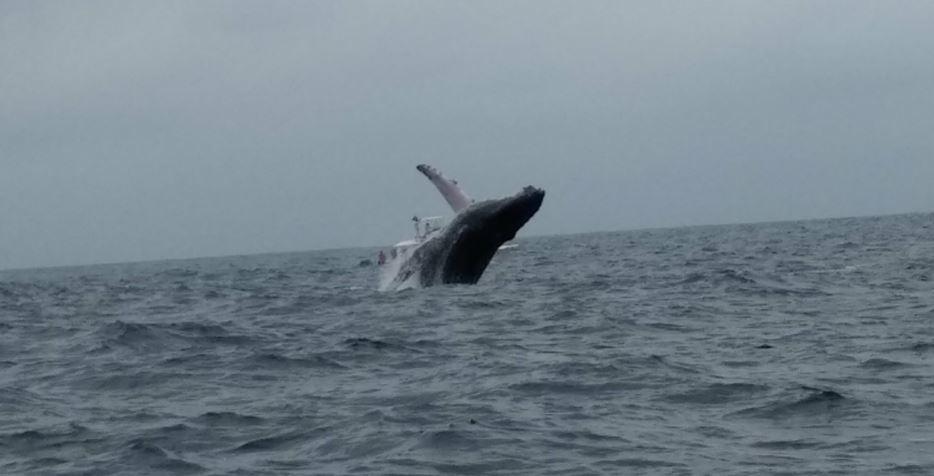 Baleine-1535769038