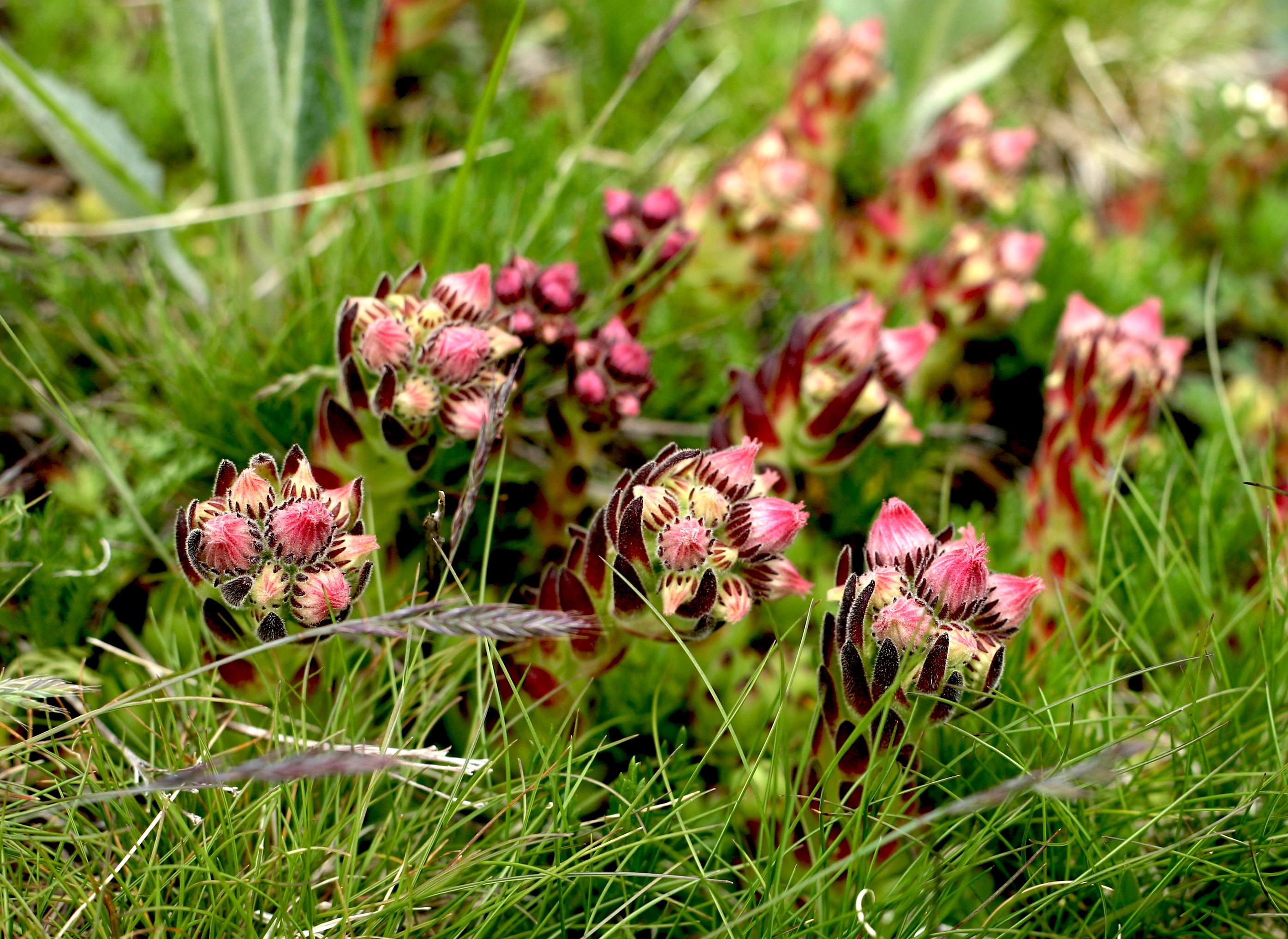 fleurs_1.jpg