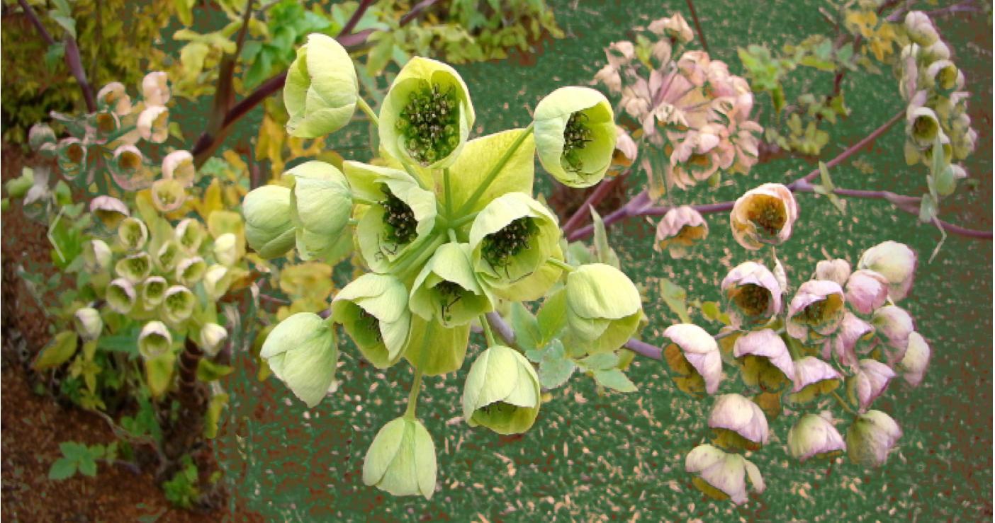 fleur-1448543063.png