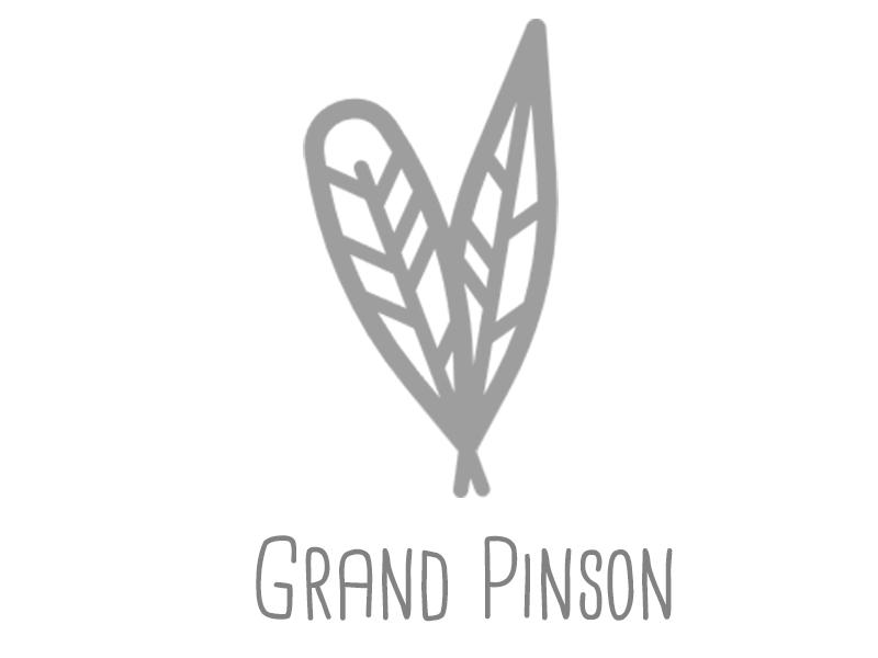 grand-pinson-1453972012.jpg