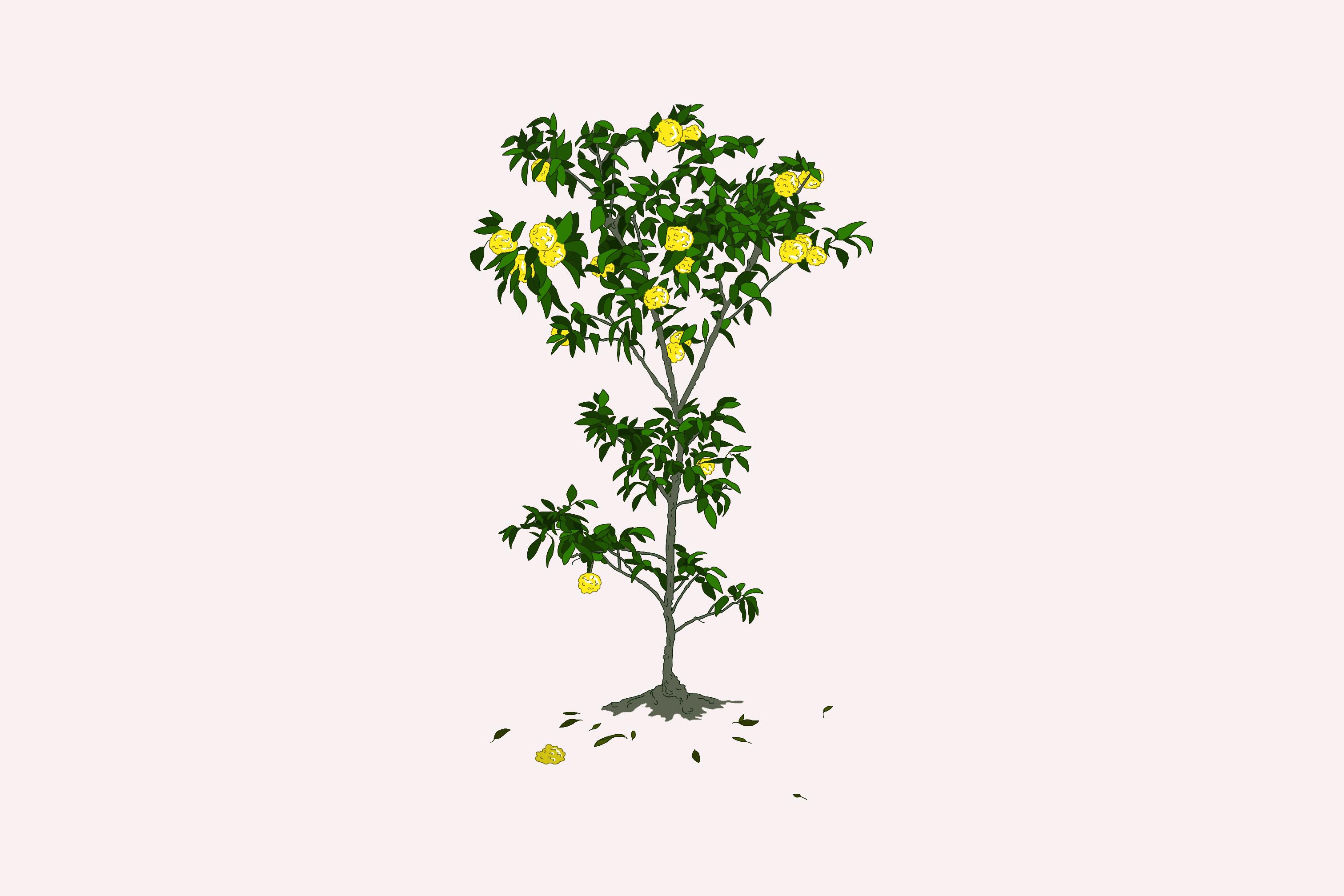 arbre-yuzu-1454864906.jpg