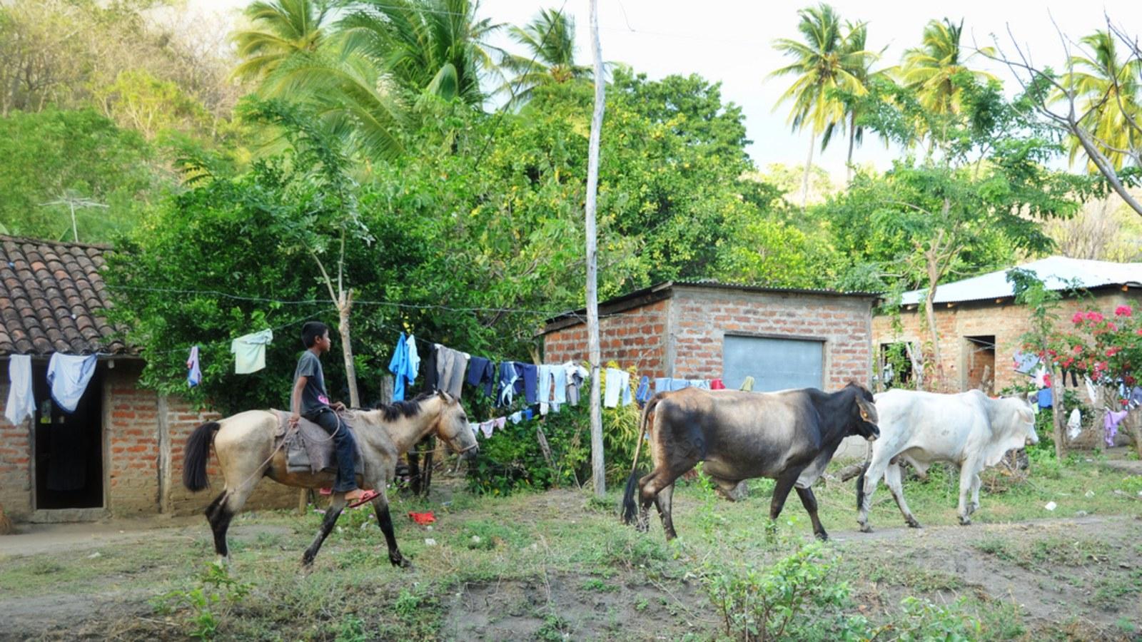chevaux-dans-les-rues-d-ometepe-nicaragua-1456343358.jpg