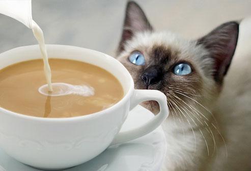 coffee_cat_9-1458066848.jpeg