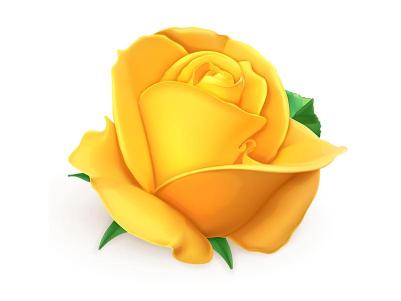 Rose_jaune-800x600px-1459425696.jpg