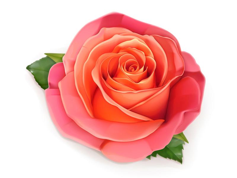 Rose_rose-800x600px-1459425711.jpg