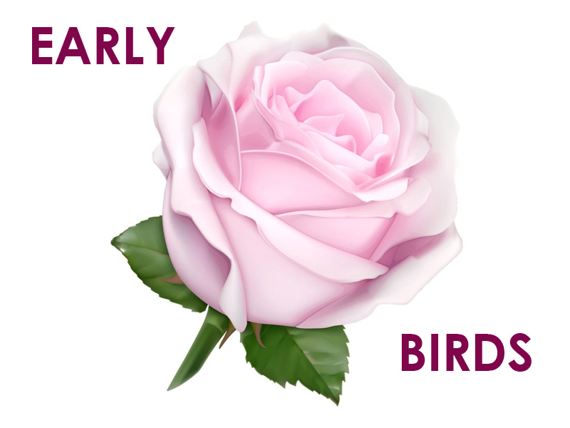 Rose_mauve_clair-800x600px-early-birds-1459425725.jpg