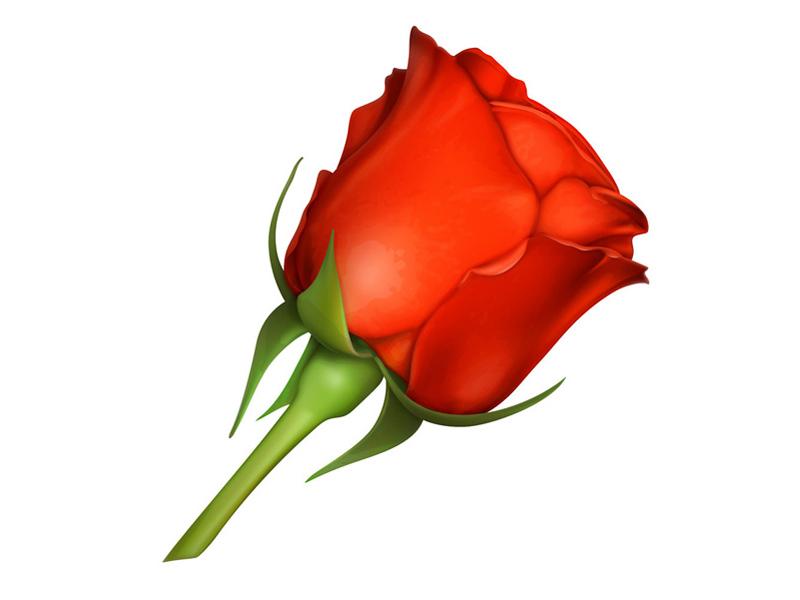 Rose_orange-800x600px-1459425737.jpg