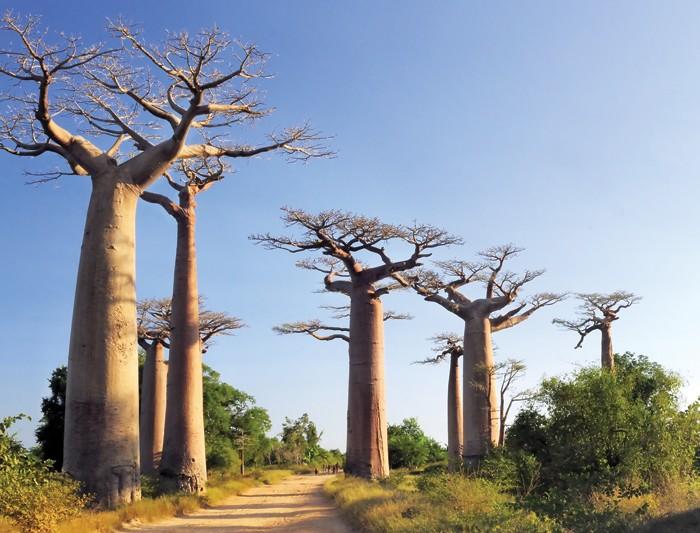 10_baobab-1460973105.jpg