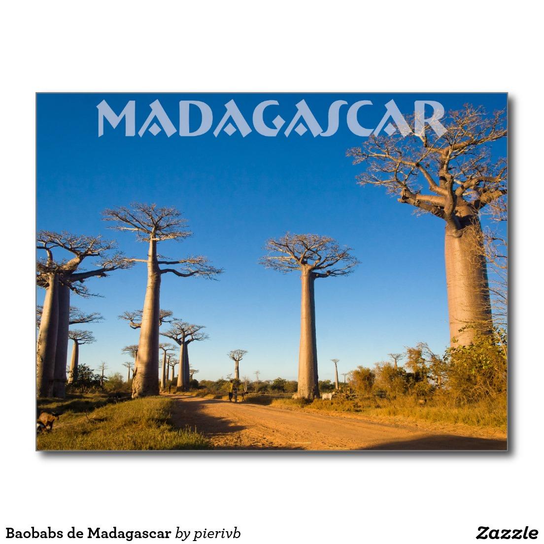 baobabs_de_madagascar_cartes_postales-rcdd97c71a020417f8ef47f0e28512f5a_vgbaq_8byvr_1024-1461751715.jpg