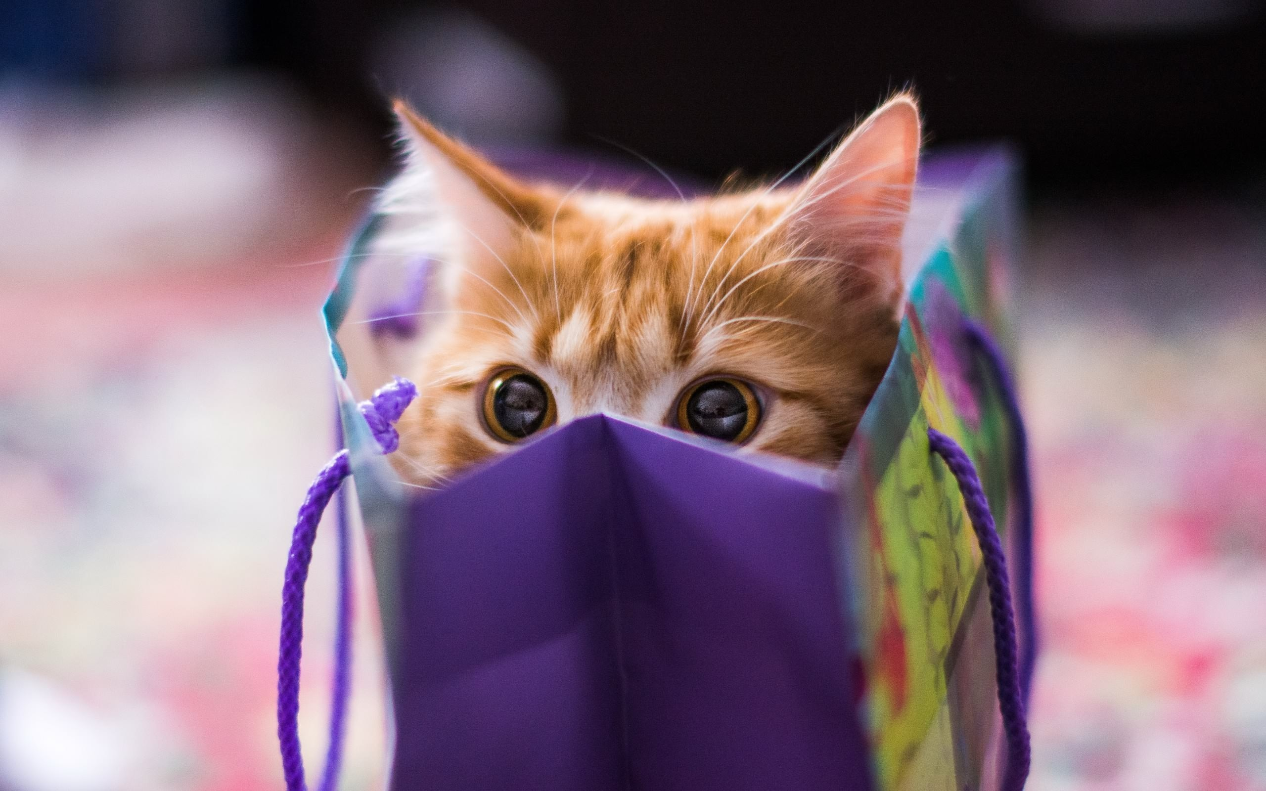 cute-cat-gift-package-wide-1461848694.jpg