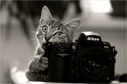 camera-cat-cute-photography-Favim.com-288955-1461850614.jpg