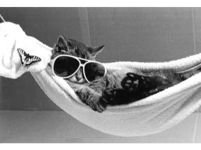 Cat-wearing-sunglasses-lies-in-a-hammock-R-diger-Poborsky-200537_129137641037750000-1461851224.jpg