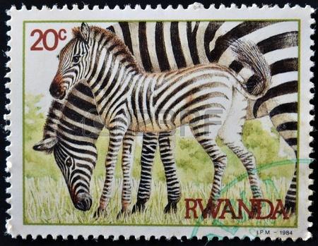 12464731-rwanda--circa-1984-un-timbre-imprime-au-rwanda-montre-deux-zebres-vers-1984-1462298621.jpg