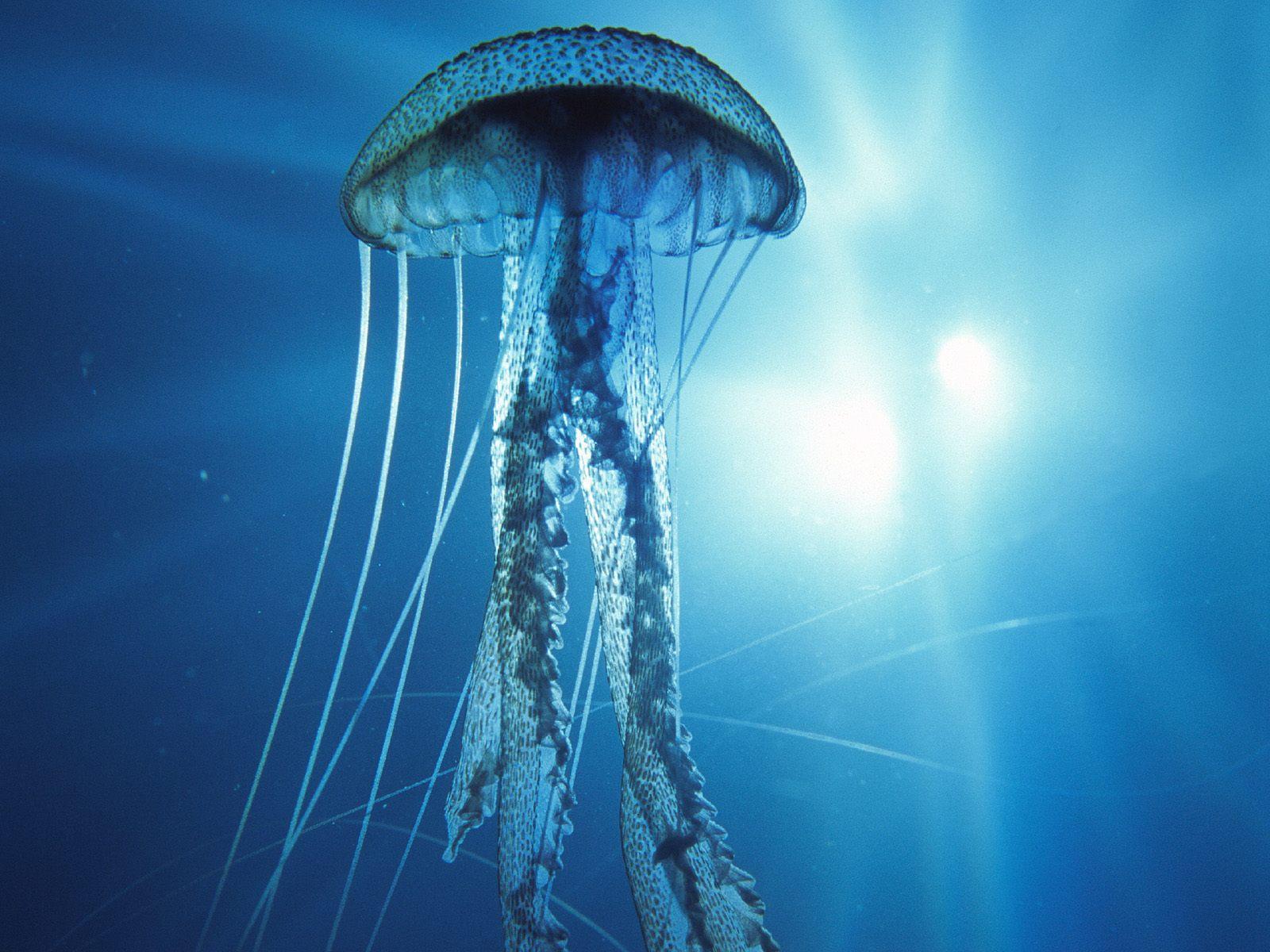 large_meduse-1462872168.jpg