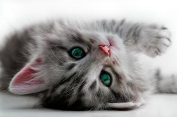 petit-photos-de-chatons-trop-mignon-1015221-1463007513.jpg