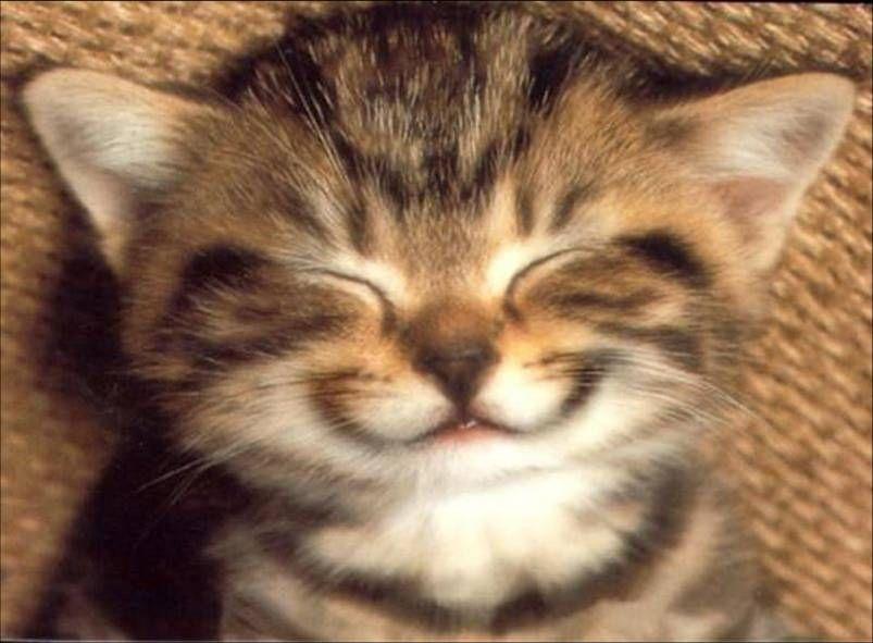 petit-chat-content-1463152367.jpg