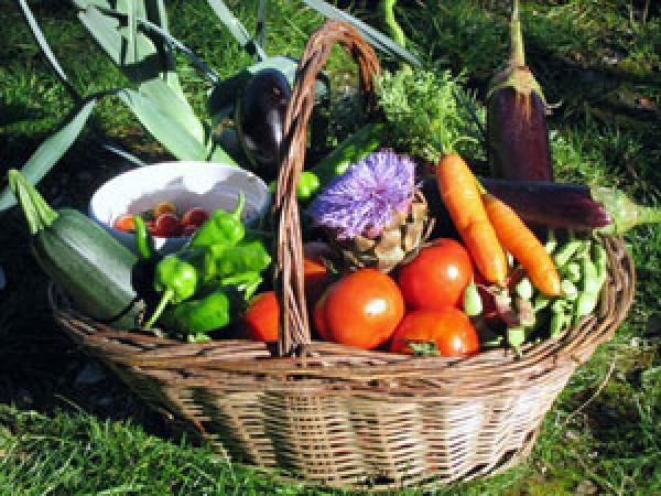 46187-panier-legumes.jpg
