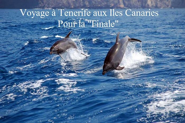 dolfijn_tenerife-1464202955.jpg