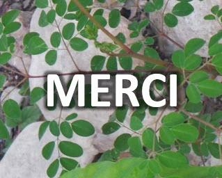 MERCI-1464540042.jpg