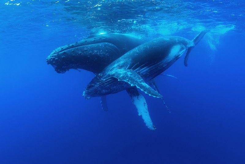 Baleines---bosse-1464951882.jpg