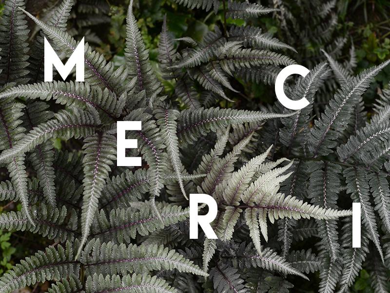 MERCI-1465207866.jpg