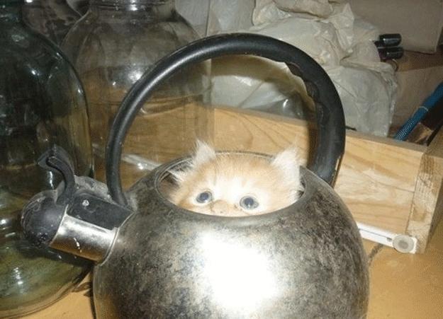chat-dans-une-th_i_re-1465836500.jpg