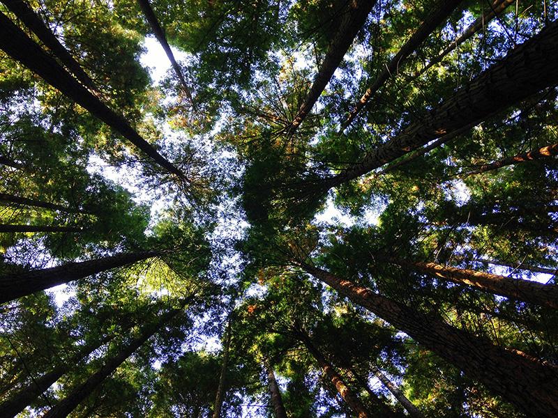 arbre-1465986583.jpg