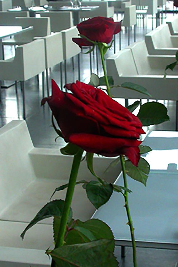 WOK_rosew-1471356038.jpg
